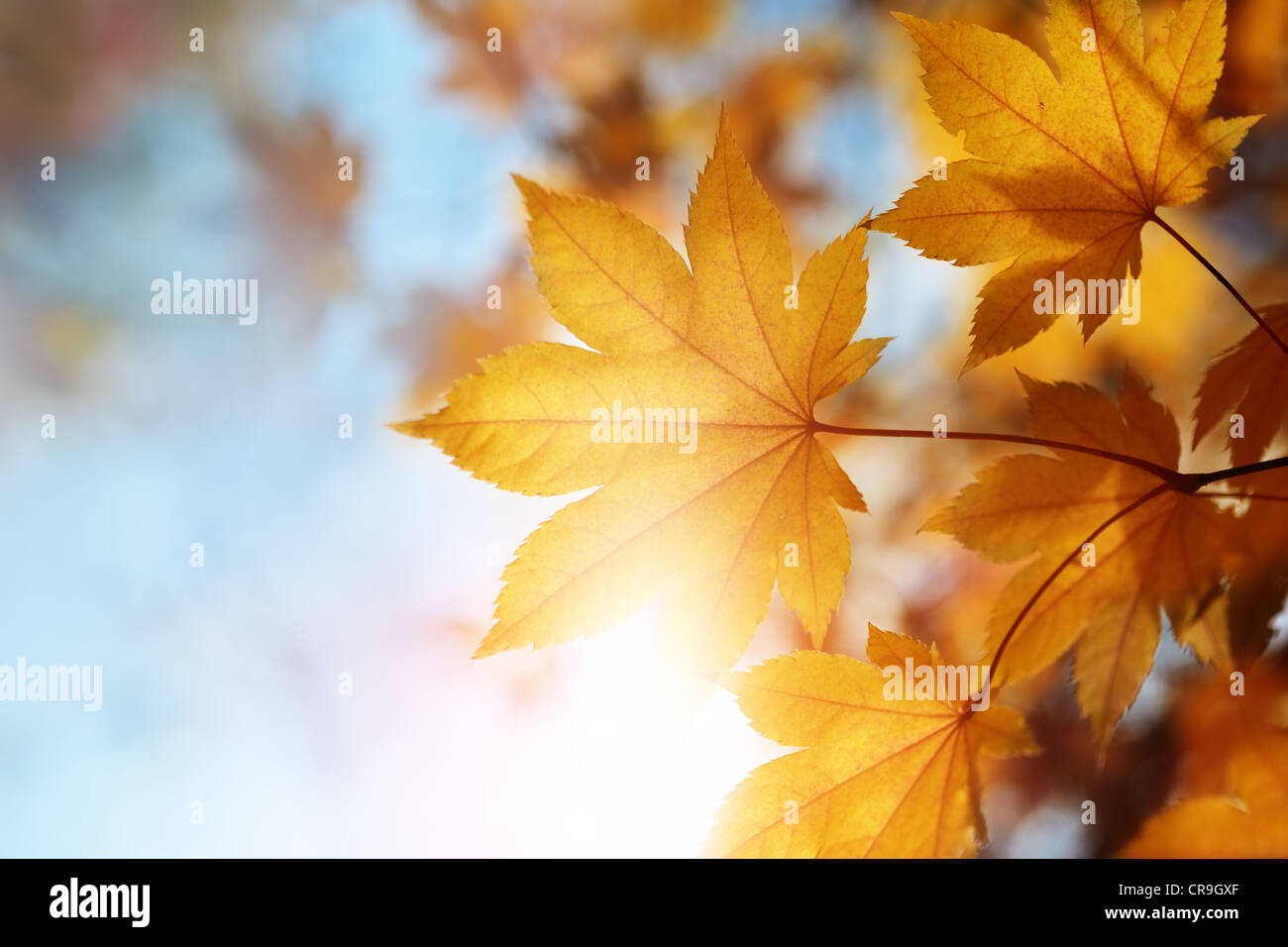 autumn leaves against the blue sky and sun, selective focus Stock Photo