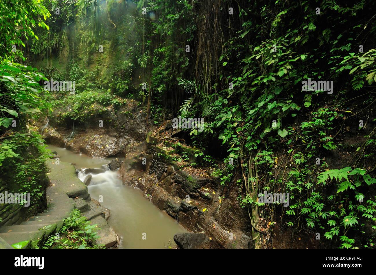 Ubud Monkey forest, Ubud, Bali, Indonesia, Asia - Stock Image