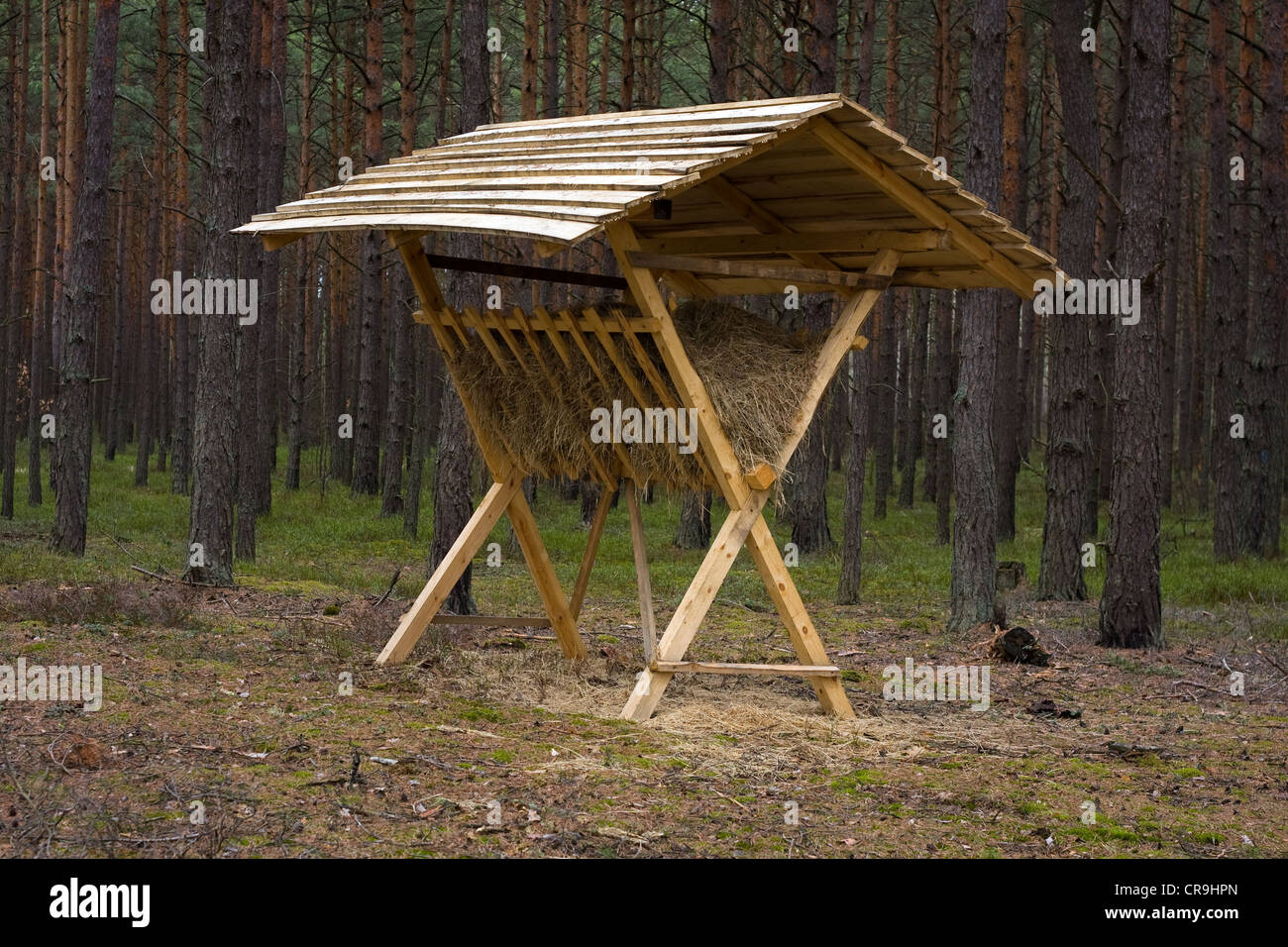 Animals feeder in forest - Stock Image