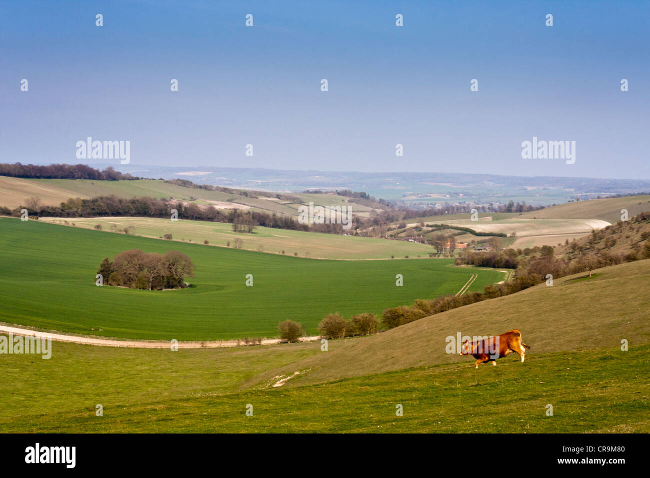 A landscape view of the Berkshire Downs from the Ridgeway National Trail at Aldworth, Berkshire, England, GB, UK. - Stock Image