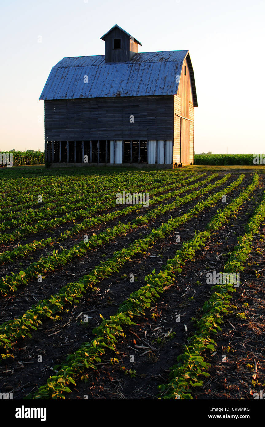 A barn built in the early 20th century on a family farm in Illinois, USA. - Stock Image