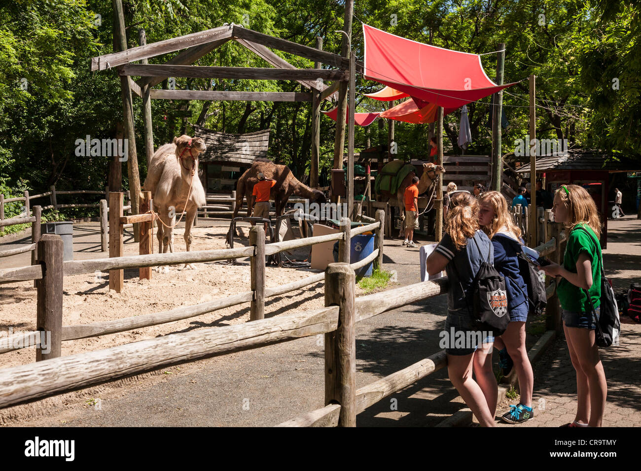 The Bronx Zoo Camel Ride Enclosure And Track Wildlife Conservation