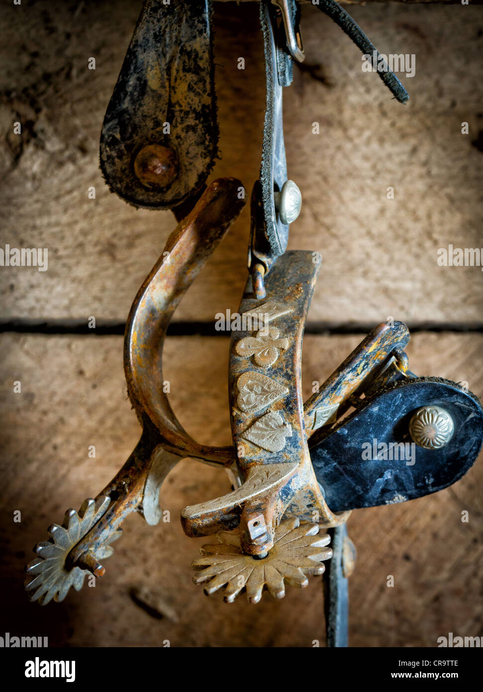 Spurs on wall in tack room on ranch in eastern Wyoming - Stock Image