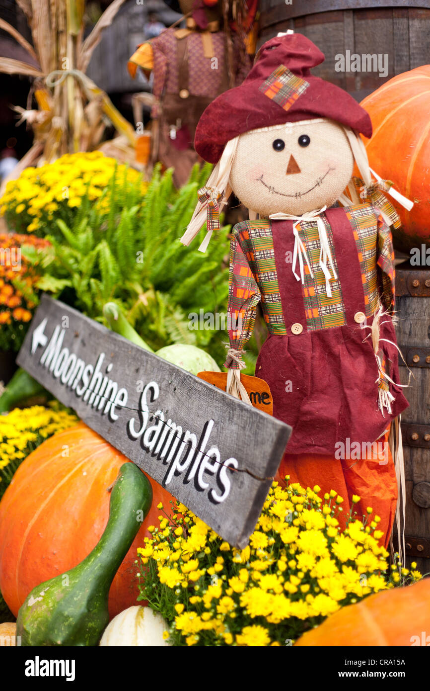 'Moonshine Samples' sign surrounded by fall decorations and scarecrow. - Stock Image