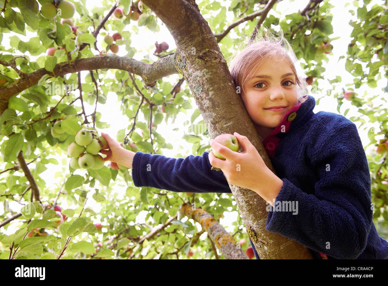 Smiling girl picking fruit from tree Stock Photo