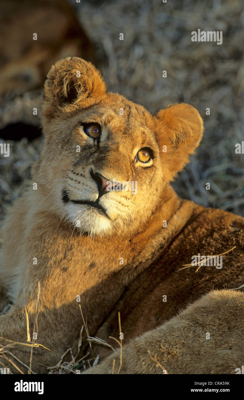 Greater Kruger Stock Photos & Greater Kruger Stock Images ...