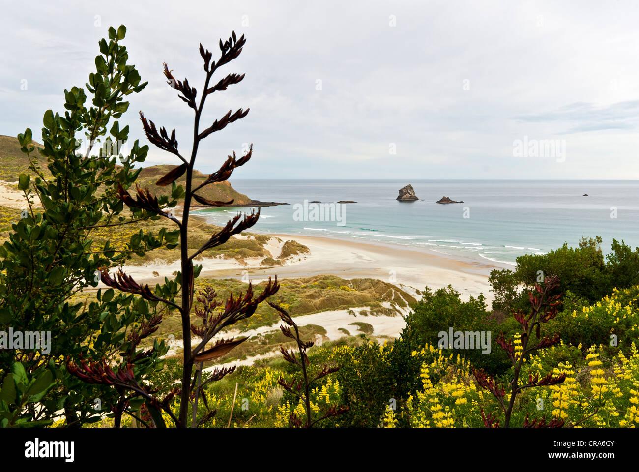 New Zealand Otago Peninsula South Island coastal vegetation beach sea and rocks - Stock Image