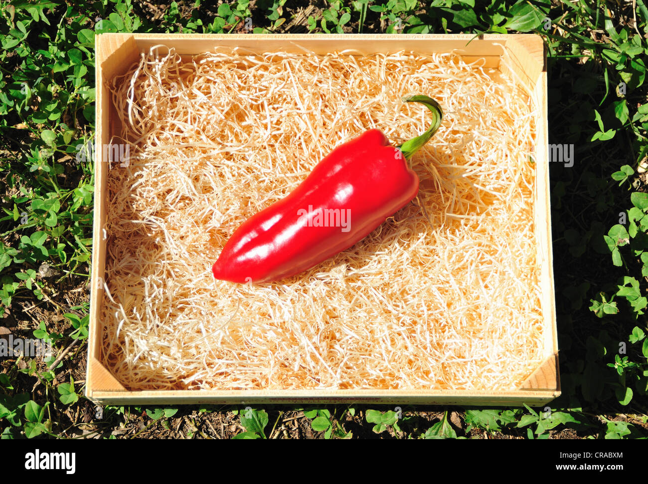 Close up of chili pepper in wooden box - Stock Image