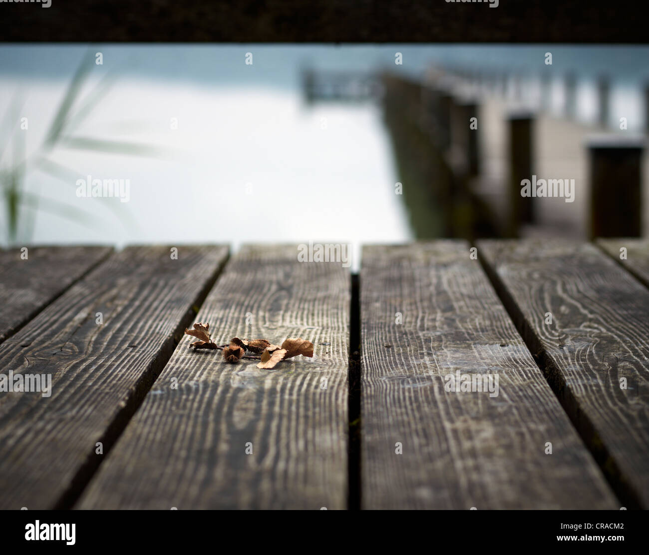 Beechnuts on the planks of a jetty in Lake Woerthsee, Bavaria, Germany, Europe - Stock Image