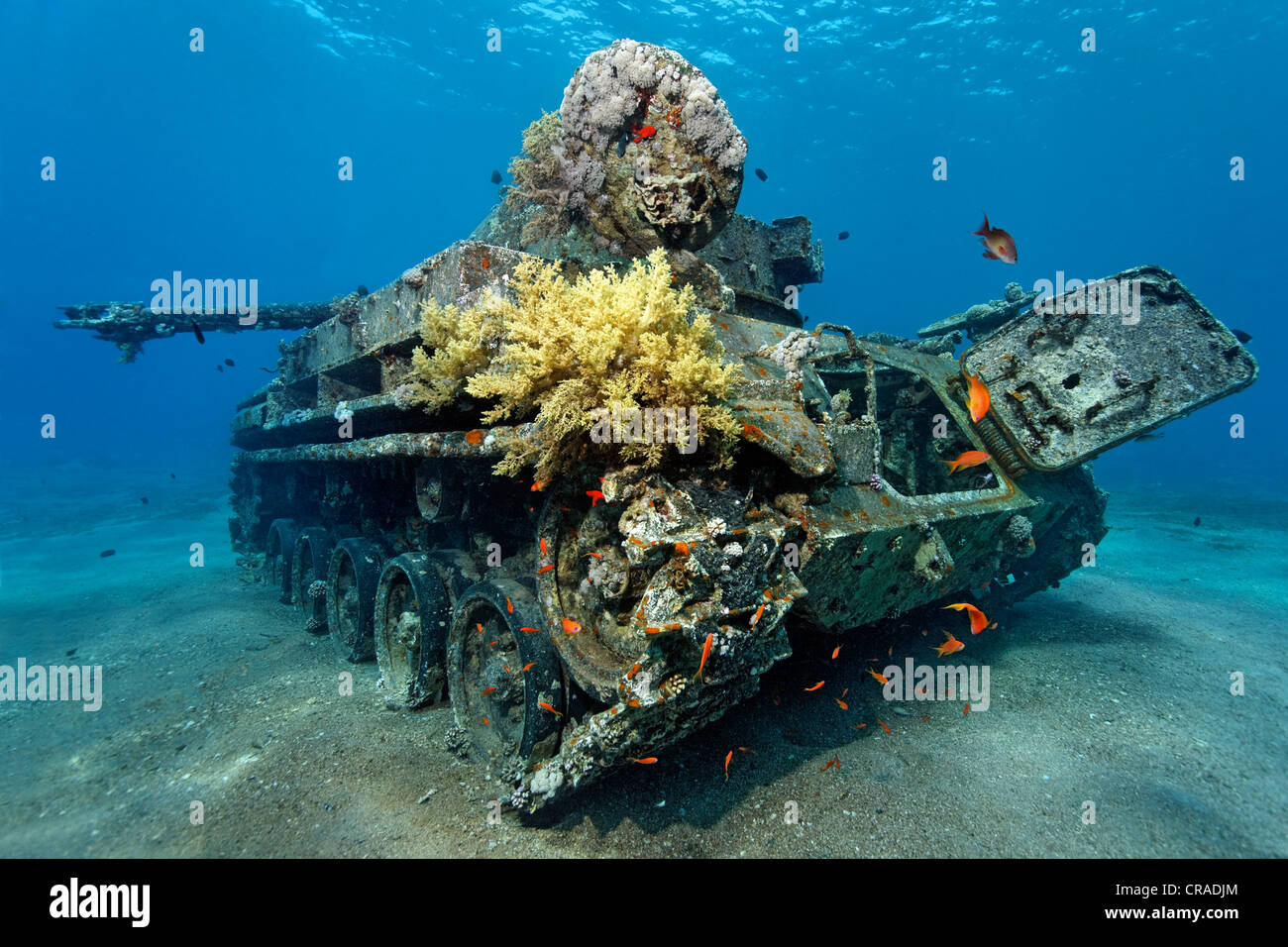 American tank M42 Duster with self-propelled 40mm anti-tircraft gun, wreck, Hashemite Kingdom of Jordan, Red Sea, - Stock Image