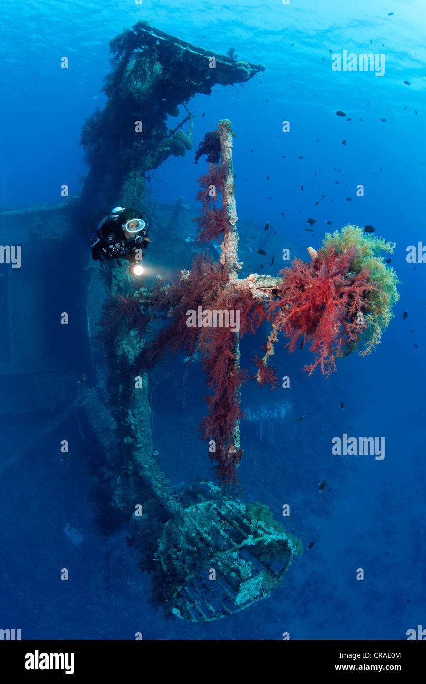 Diver at mast of awreck, overgrown with Vibrant Broccoli coral (Dendronephthya klunzingeri), Cedar Pride, Red Sea - Stock Image