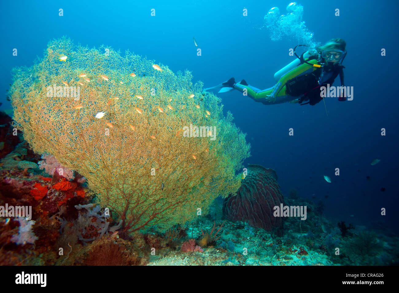 Diver in a coral reef, Padre Burgos, Southern Leyte, Philippines, Asia - Stock Image