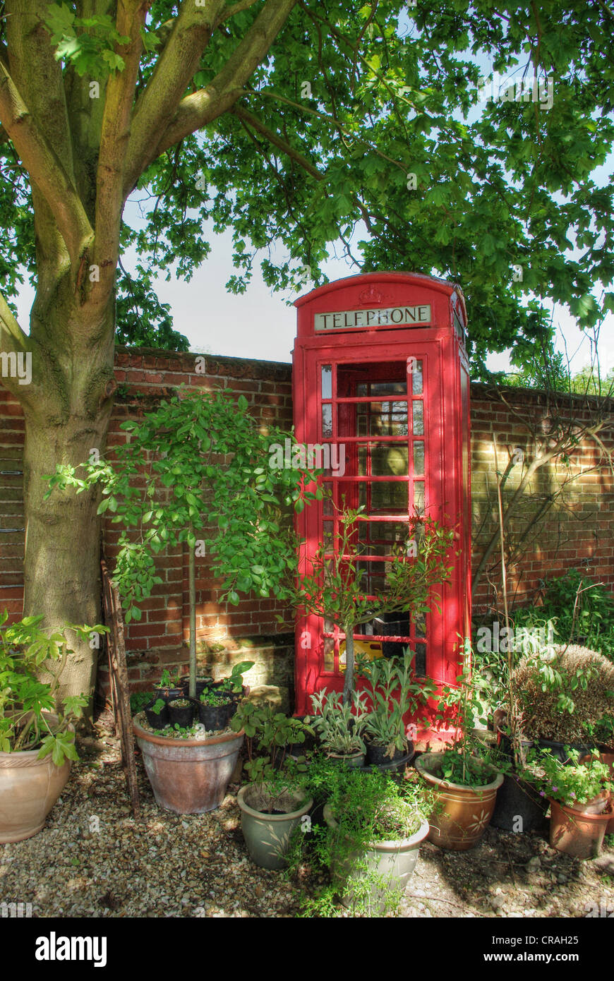 Old red telephone kiosk, recycled as a greenhouse, in the garden of Oakley House, Bedfordshire - Stock Image