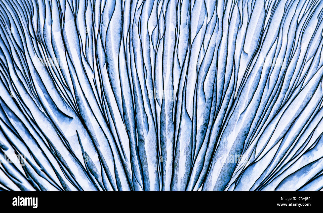 the Gills of a Portobello Mushroom inverted - Stock Image