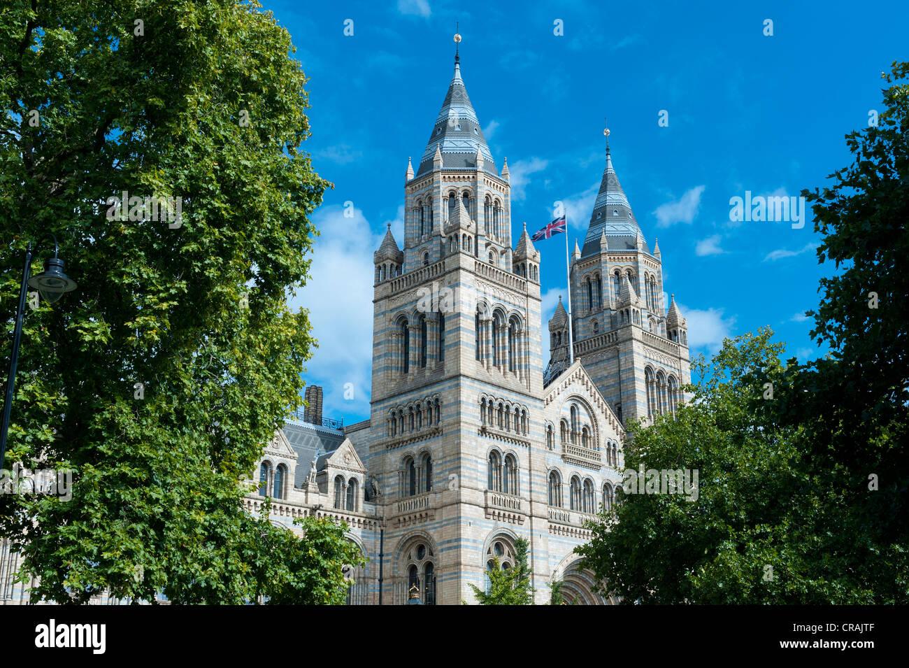 Natural History Museum, London, England, United Kingdom, Europe - Stock Image