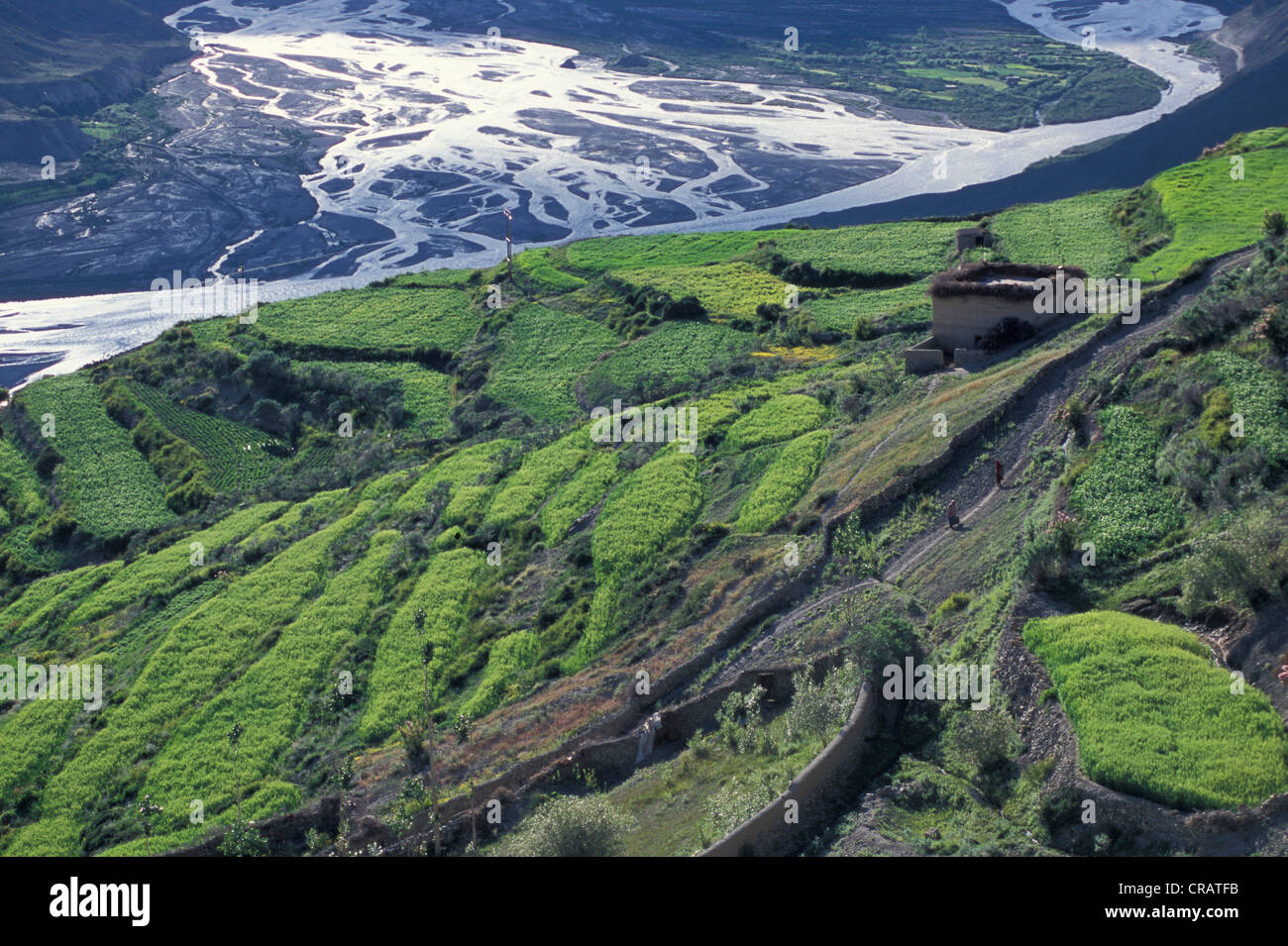 Fields, Dhankar, Spiti, Himachal Pradesh, Himalaya, North India, India, Asia Stock Photo