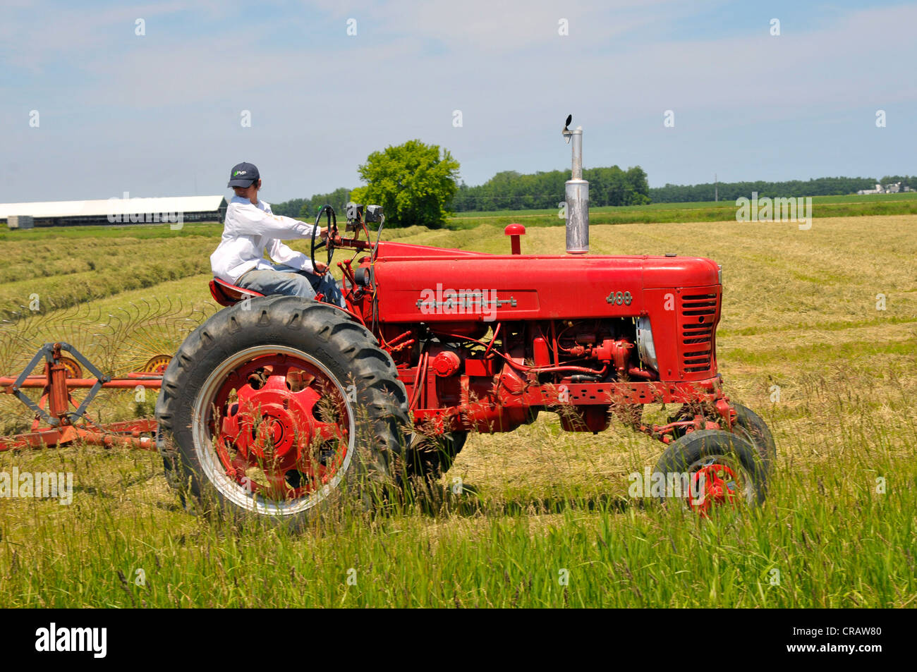 Farmer On Tractor : Farmer on tractor raking hay for animal feed stock photo