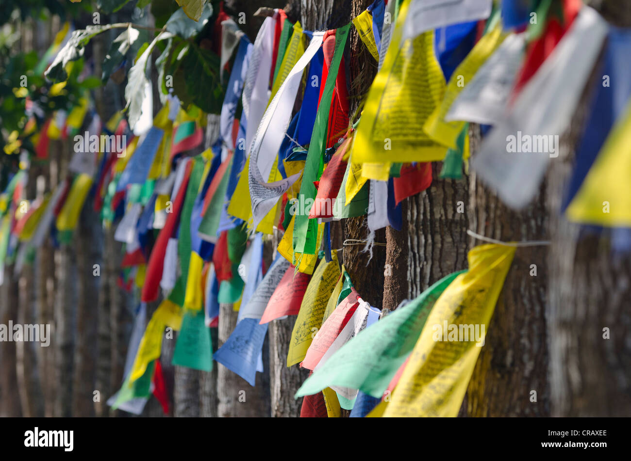 Prayer flags, Tibetan refugee settlement in Bylakuppe, Mysore District, Karnataka, South India, India, Asia - Stock Image