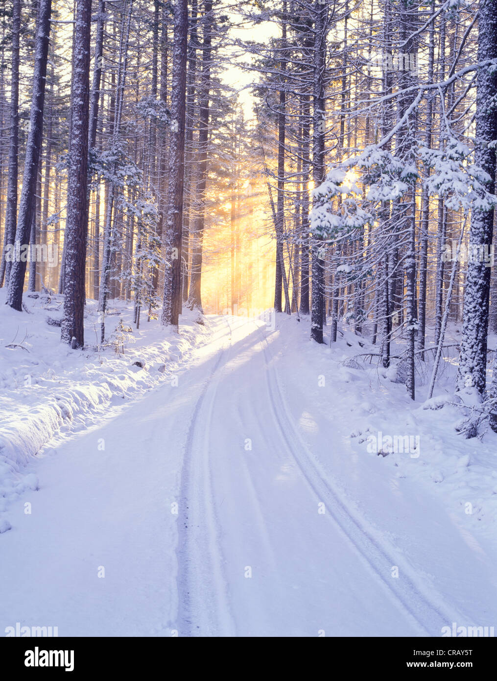 Road in deschutes National Forest with snow and sunburst. Oregon - Stock Image