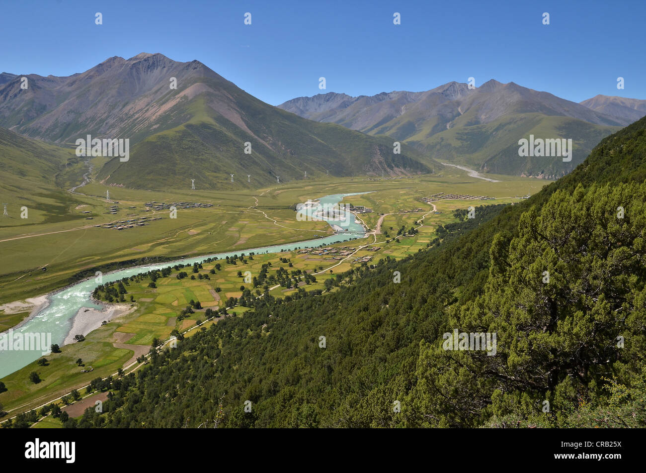 Centuries-old juniper forests near Reting Monastery, Tibet, Asia Stock Photo