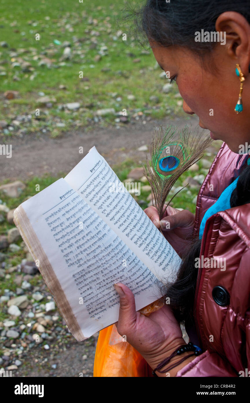 Young woman reading Tibetan scriptures with peacock feather in hand, Kailash Kora, Western Tibet, Tibet, Asia - Stock Image