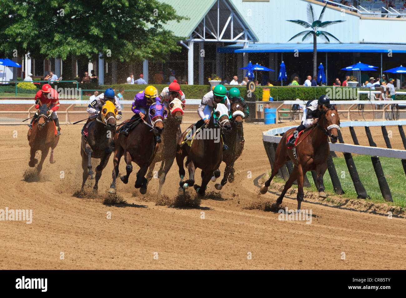 Horses coming into the first turn of a thoroughbred race, - Stock Image