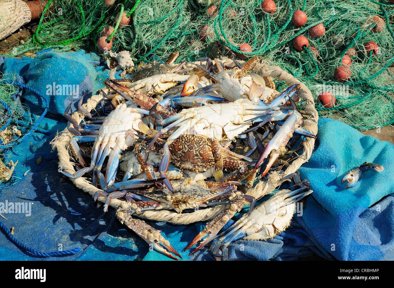 Freshly caught crabs, Qatar - Stock Image