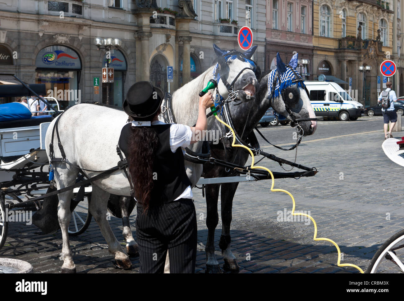 A woman spraying water on the horses of a carriage in the summer heat, Prague, Czech Republic, Europe - Stock Image