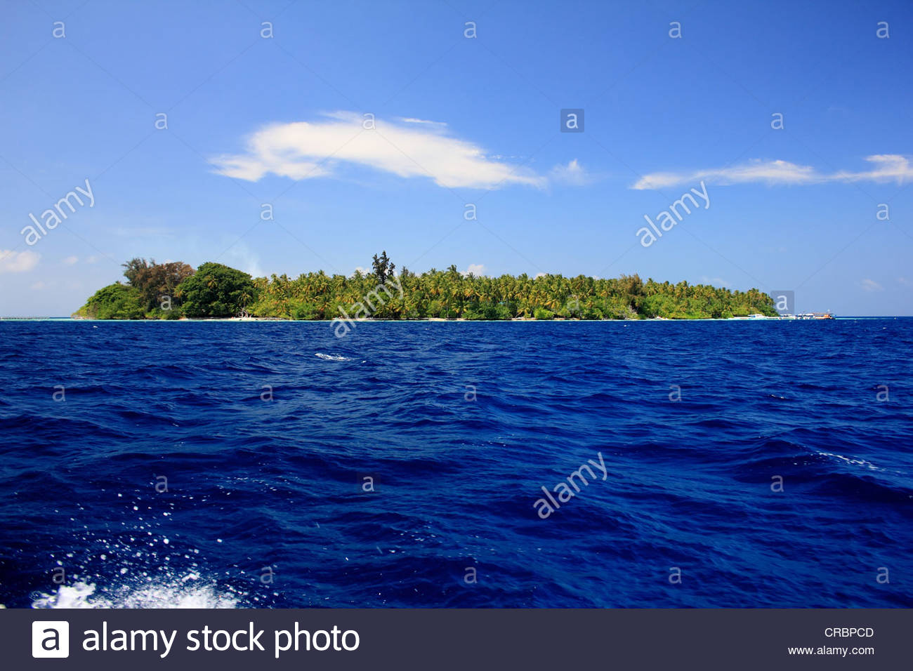 Palm trees on tropical island - Stock Image