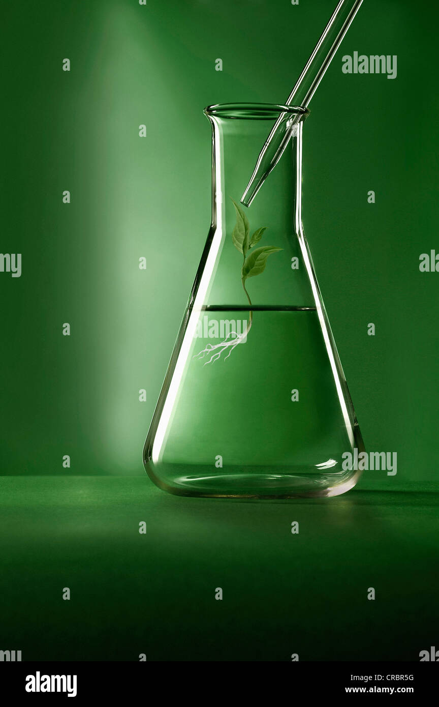 Plant growing in graduated cylinder - Stock Image