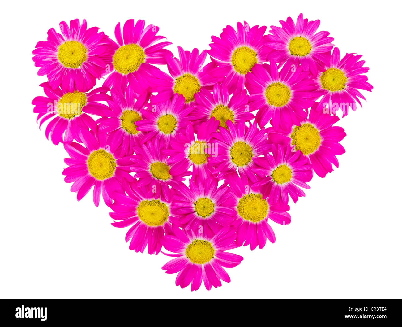 Abstract Heart From The Rare Pink Daisies Flowers Isolated Stock