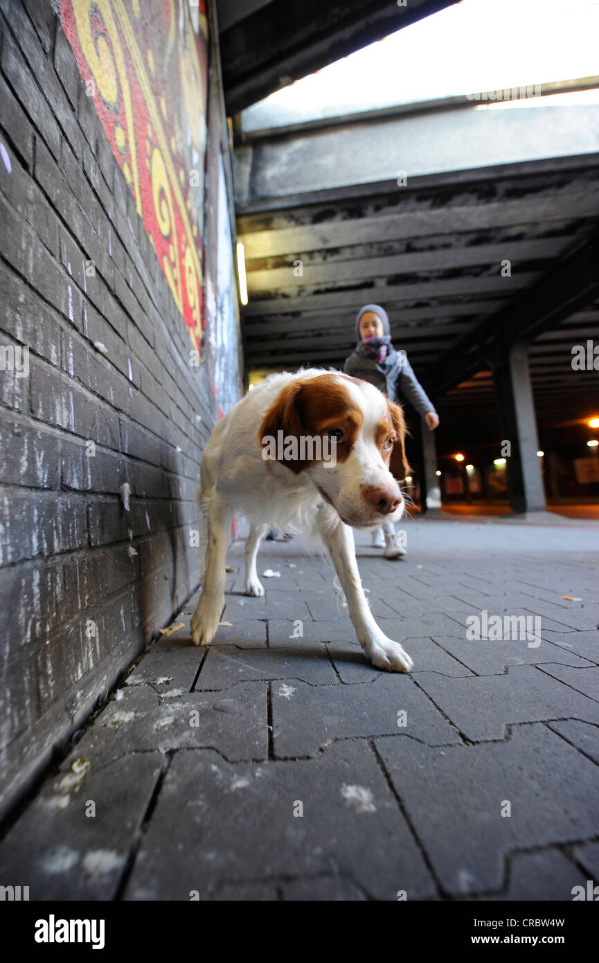 Dog going for a walk in the big city - Stock Image