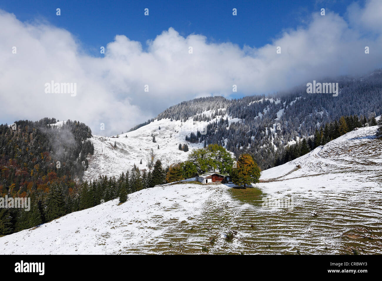 Lower Dickelalm alp on Mt Wendelstein, Bayrischzell, Mangfall mountains, Upper Bavaria, Bavaria, Germany, Europe - Stock Image