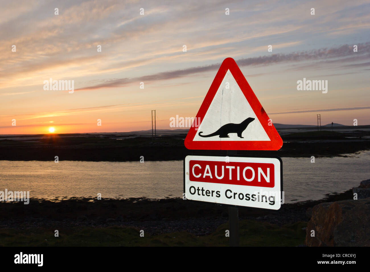 Otters crossing (Outer Hebrides) - Stock Image