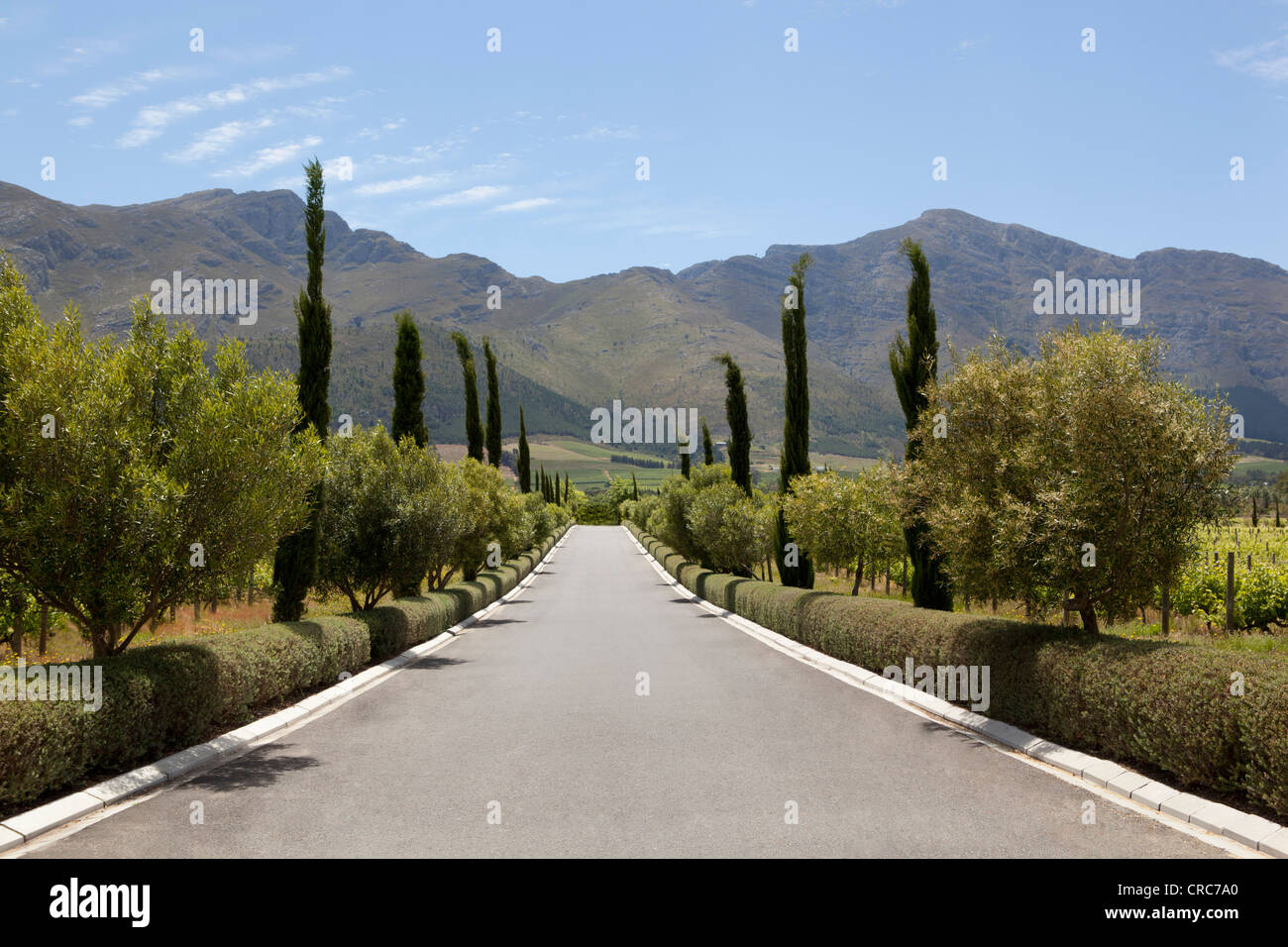 Trees lining rural road - Stock Image