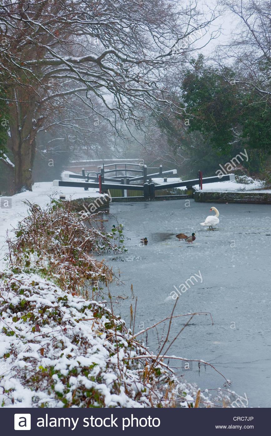 Birds walking on frozen rural river - Stock Image