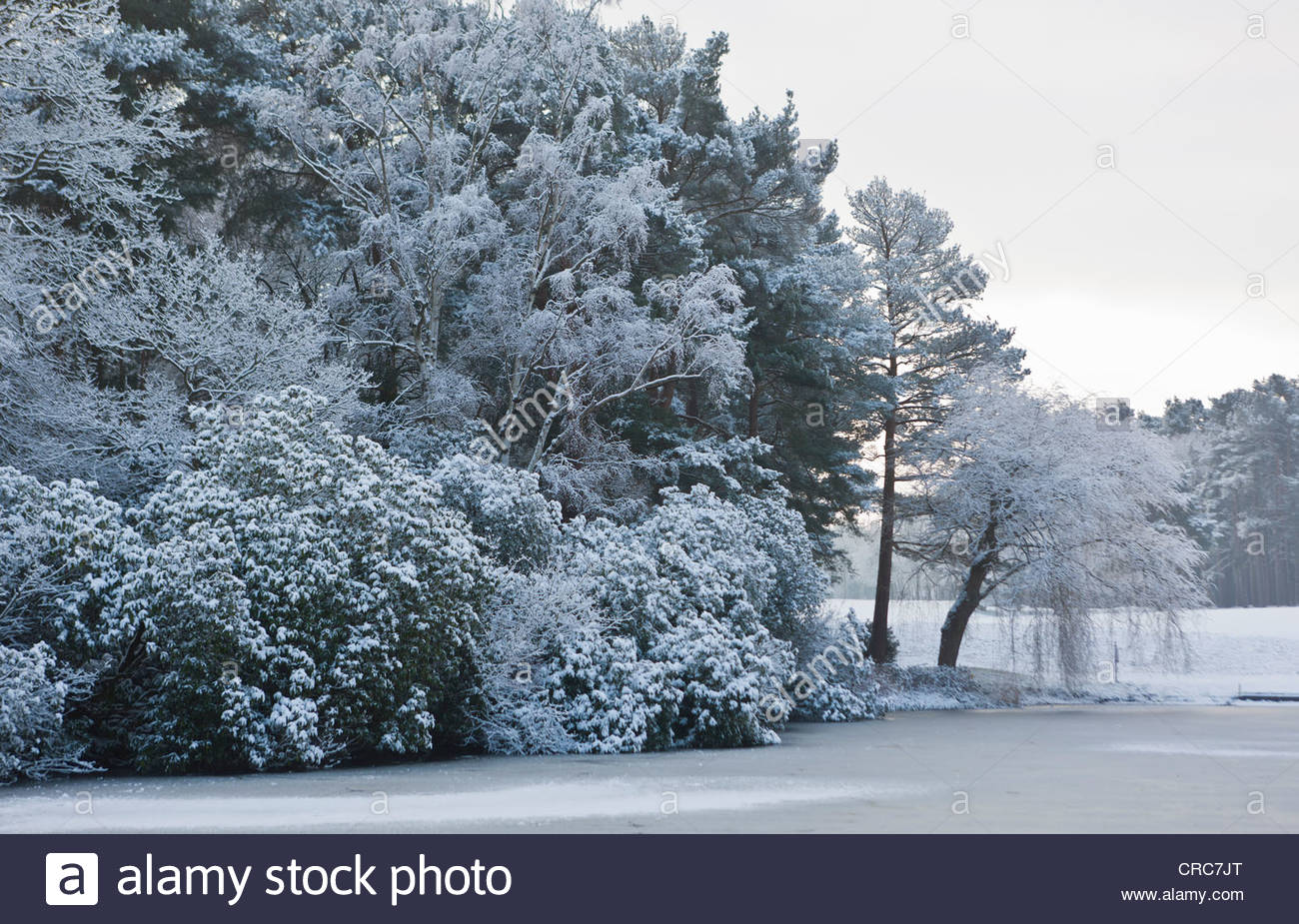 Trees and river in snowy landscape Stock Photo