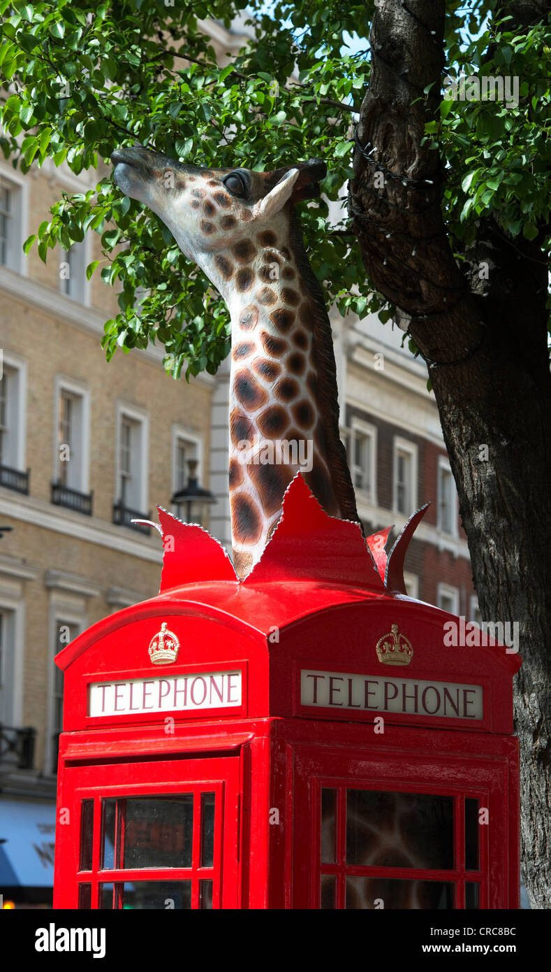 Giraffe in a Telephone box. BT ArtBox 'Long Distance'. Leicester Square, London, England - Stock Image