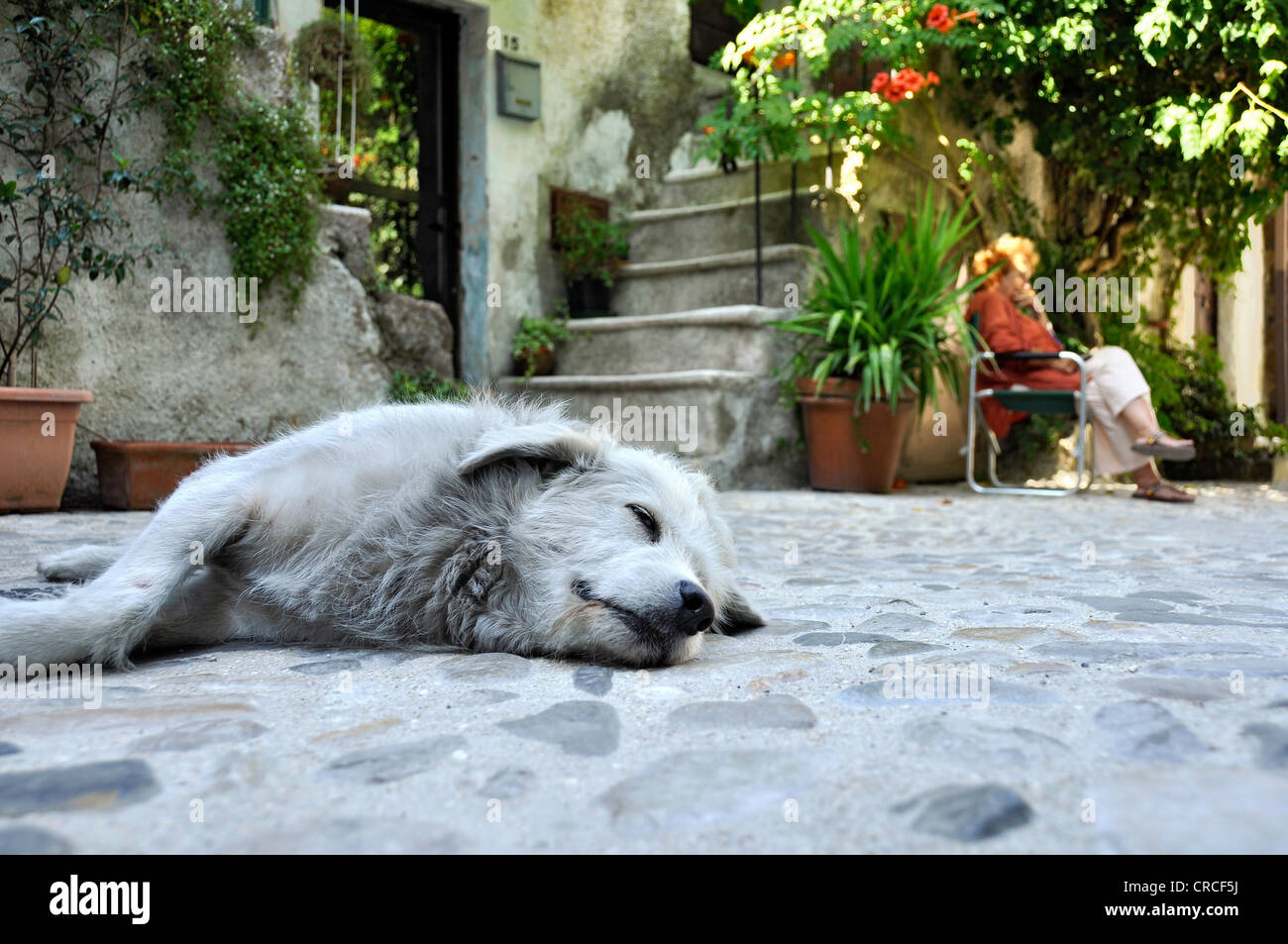 Sleeping dog in front of a house, main street, Via Garibaldi, the medieval town of Vecchia Calcata, valley of Valle - Stock Image