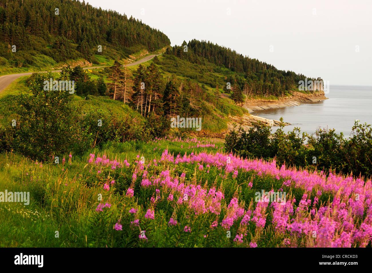 Coast, Forillon National Park, Gaspésie or Gaspé Peninsula, Quebec, Canada - Stock Image