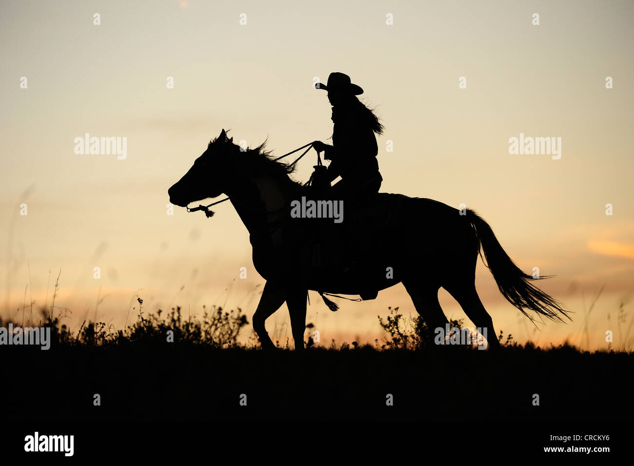 Cowgirl And Horse Silhouette High Resolution Stock Photography And Images Alamy