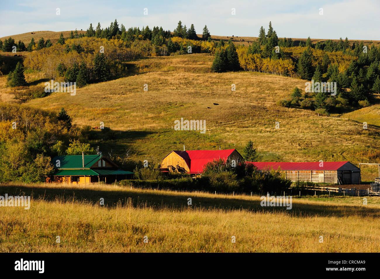 Cowboy ranch on the prairie, Saskatchewan, Canada - Stock Image
