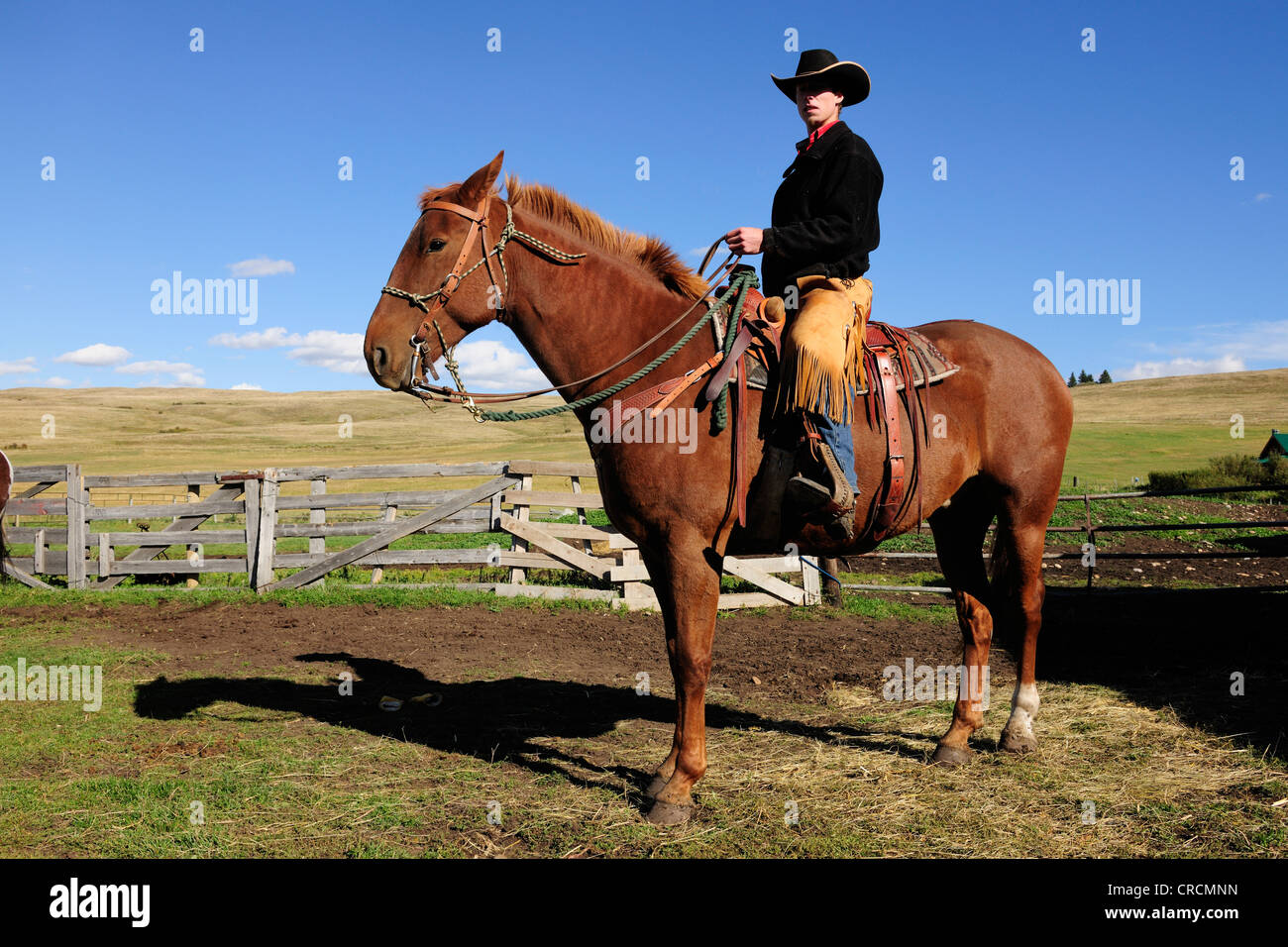 Cowboy Horse High Resolution Stock Photography And Images Alamy