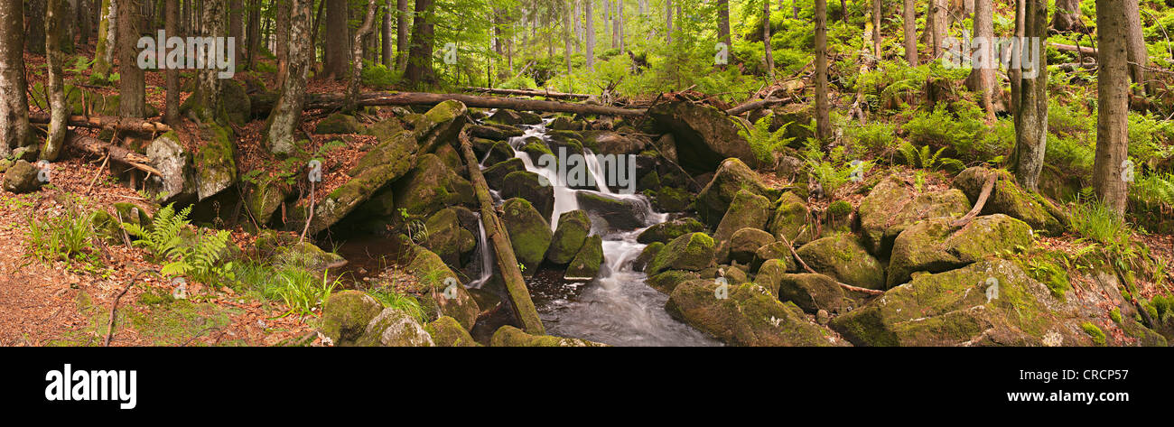 Kleine Ohe stream in the primeval forest, Bavarian Forest National Park, Bavaria, Germany, Europe - Stock Image