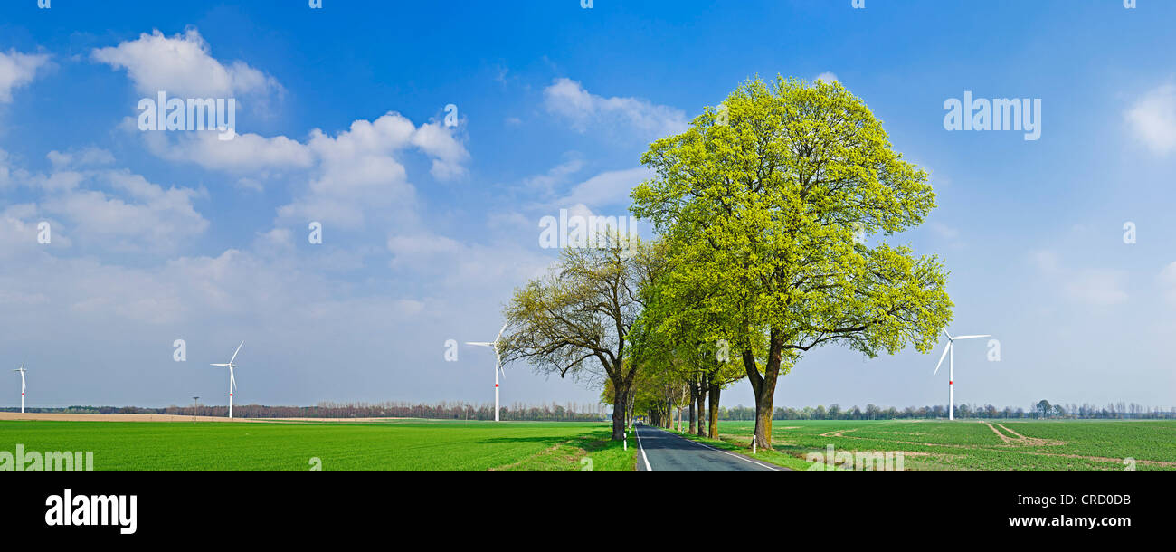 Alley and wind engine near Freudenberg, Landkreis Maerkisch-Oderland, Brandenburg, Germany, Europe - Stock Image