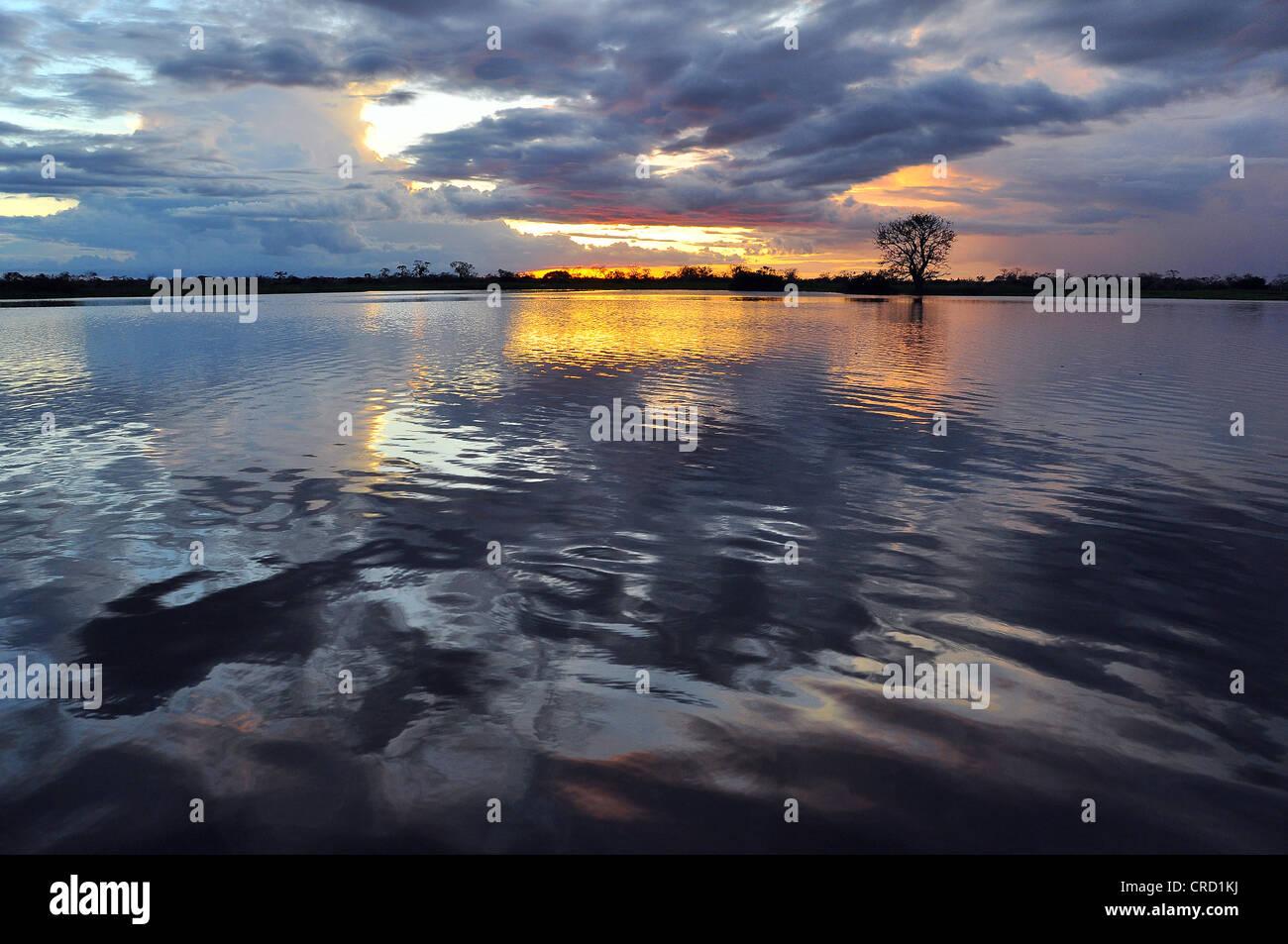 Sunset in the Amazon region, Mamiraua Reserve near Tefe, Amazonas, Brazil, South America - Stock Image