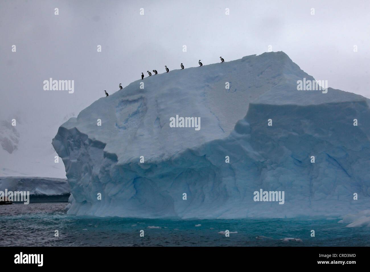 ice berg, antarctica - Stock Image