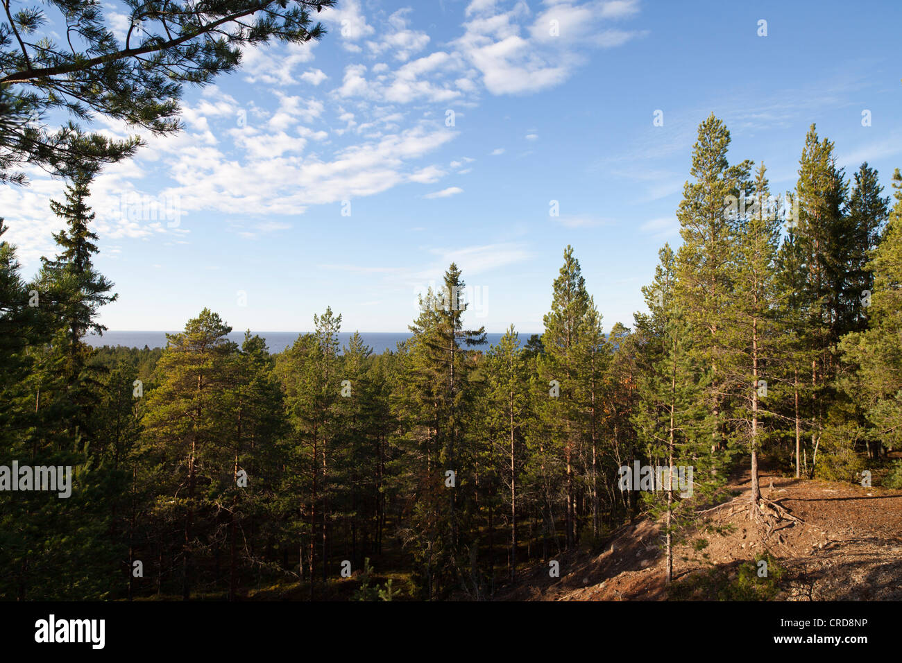 View from Runtelinharju esker , an old seashore . Sightseeing site to sea , Finland - Stock Image