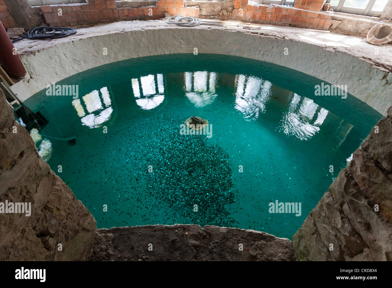 Pool, tossed coins, and a frog, A frog sculpture floats in a partially restored pool in Boldt Castle. - Stock Image