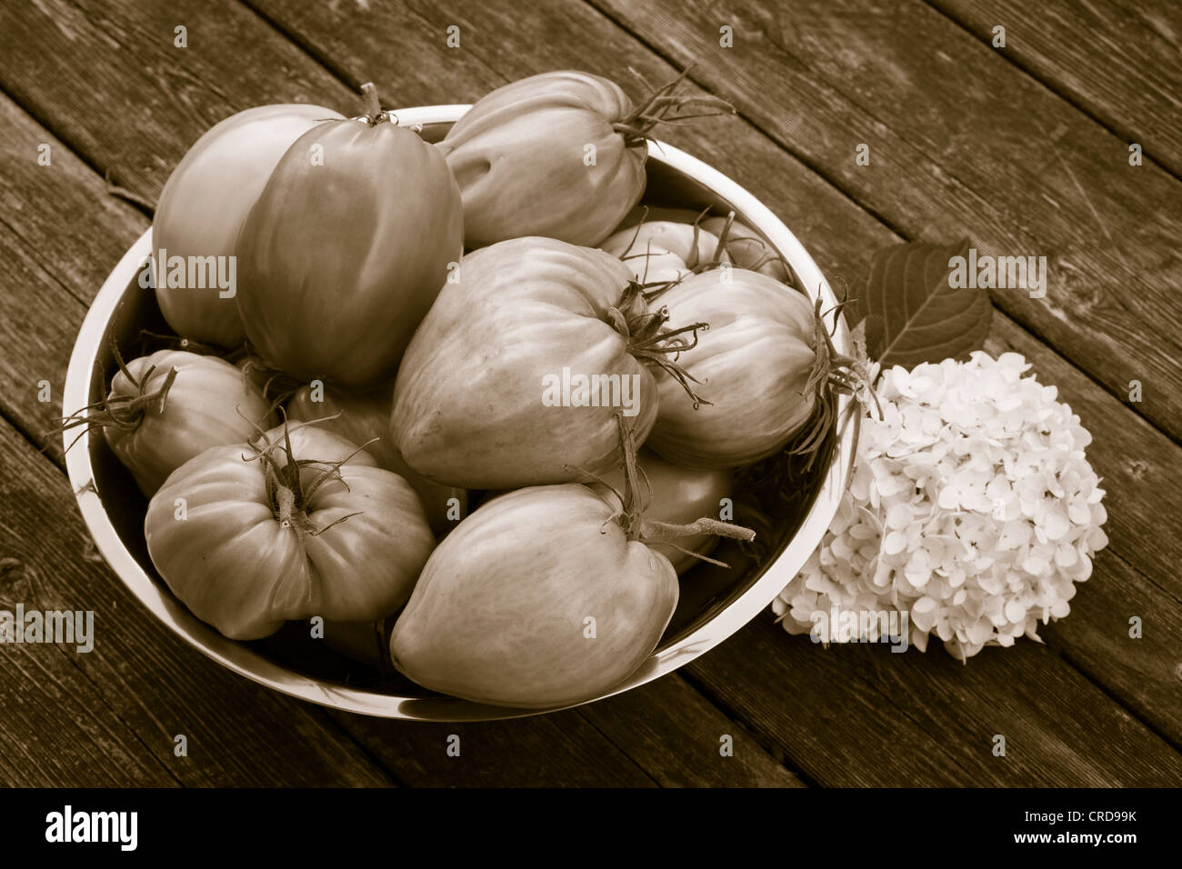 A Bowl of Oxheart Tomatoes Monochrome.  A bowl of large tomatoes of various hues with a hydrangia flower. - Stock Image